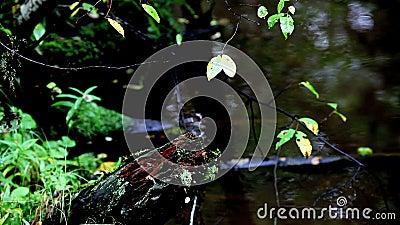 Tropische beek stock videobeelden