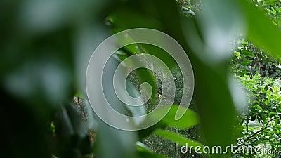 Tropische bladerenachtergrond Botanisch tuinblad stock videobeelden