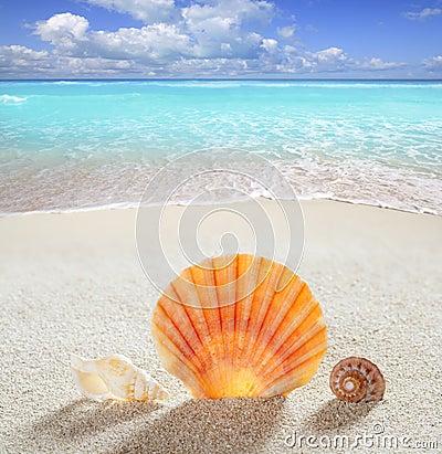 Tropische vollkommene Sommerferien des Strandsandshells