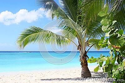 Tropischer Strand und Schacht
