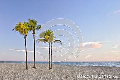 Tropisches Paradies in Miami Beach Florida mit Palme