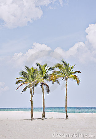 Tropiskt strandflorida miami paradis