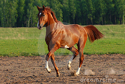 Trot horse