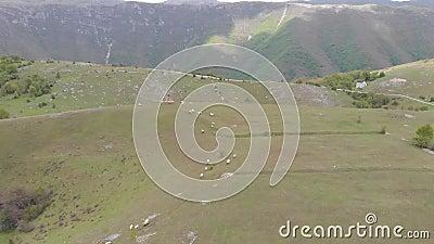 Troupeau des moutons au coucher du soleil Moutons dans un pr? dans les montagnes Bel horizontal normal banque de vidéos