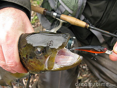 lure for sea trout fishing stock photos - image: 29837683, Reel Combo