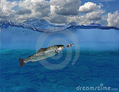 Trout under water
