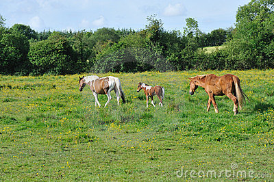 Três cavalos no prado