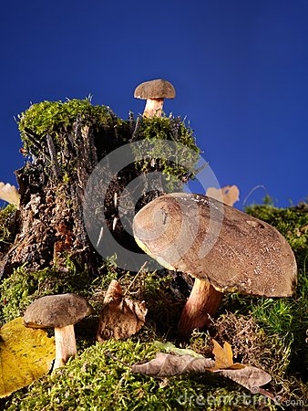 Três cogumelos