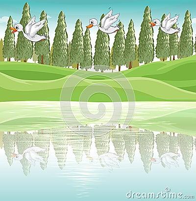 Três patos que voam ao longo do rio