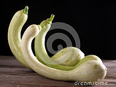 Trumpet zucchini, standing up