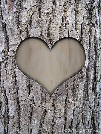 Trunk bark and love heart