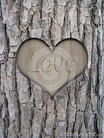 Trunk bark and love heart