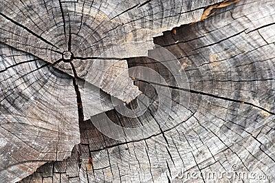 Trunk Log Slice