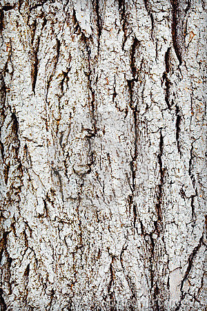 Free Trunk Of Old Wood - Rough Bark Royalty Free Stock Photos - 14913698