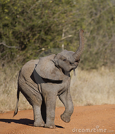 Trunk Up