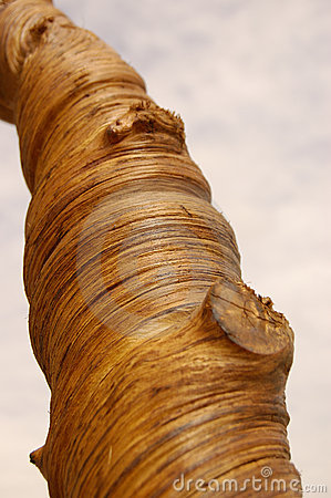 Trunk of wood