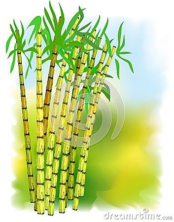Trzciny rośliny cukier