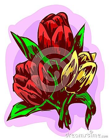 Trzy tulipanu