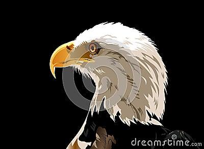 Tête d aigle chauve
