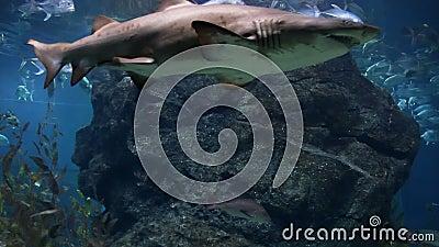 Tubarão vídeos de arquivo