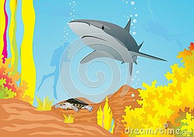 Tubarão e mergulhadores