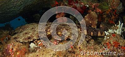 Tubarão que tem um descanso em uma caverna