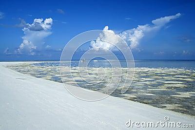 Tubataha reefs sandbank seascape philippines