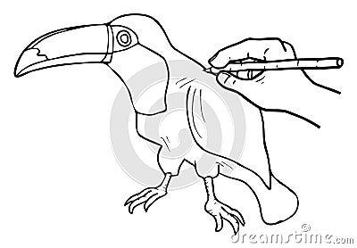 Tucan Zeichnung