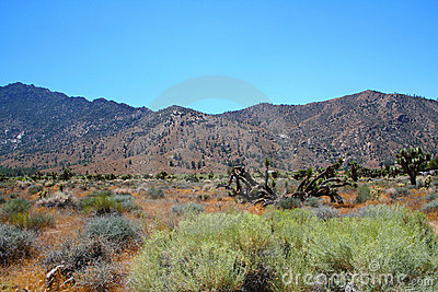 Tucson - Saguaro National Park