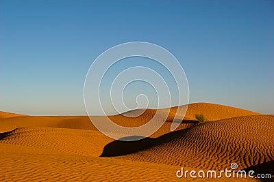 Tuffet on dune
