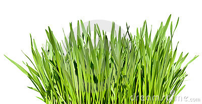 Tuft of grass