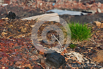 Tuft of grass on the rocks