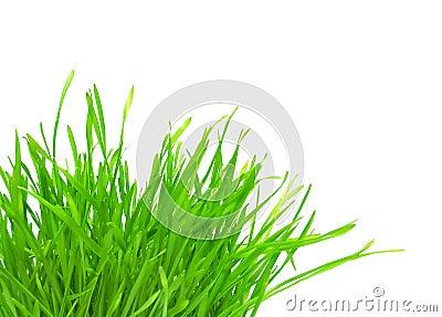 Tuft of green grass