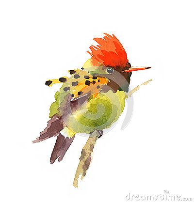 Free Tufted Coquette Hummingbird Watercolor Exotic Bird Illustration Hand Drawn Stock Photo - 70307080