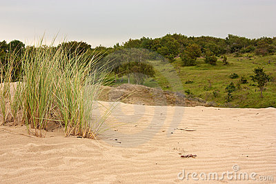 Tufts of grass on sand dune