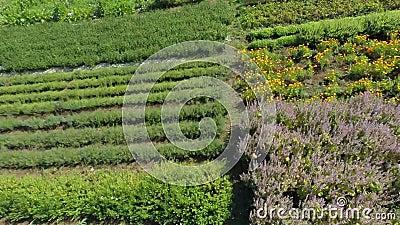 Tuinen in het platteland stock footage