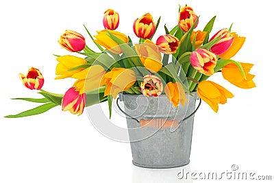 Tulip Beauties