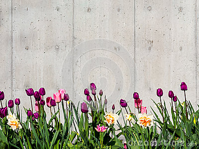 Tulip border background