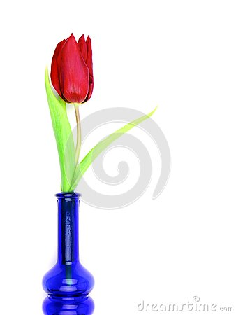 Tulip in bottle