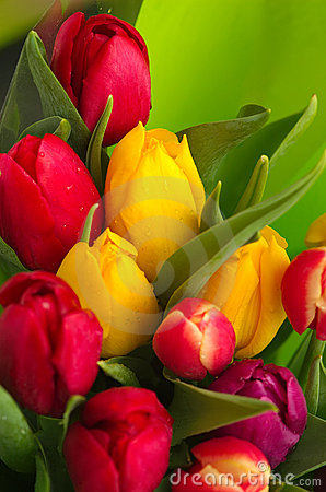 Free Tulip Bouquet Royalty Free Stock Images - 118399