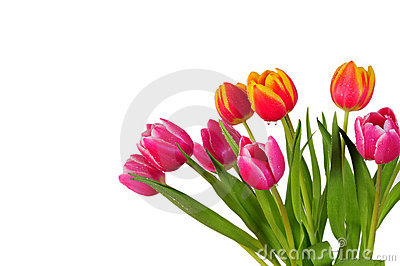 Tulip bouquet spring Easter