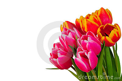 Tulip bouquet spring Easter wooden