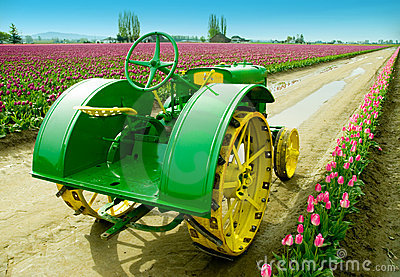 Tulip Farm Tractor Editorial Photography