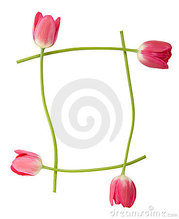 Free Tulip Floral Border Royalty Free Stock Image - 5451756