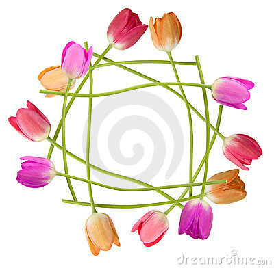 Free Tulip Floral Border Stock Photography - 5451782