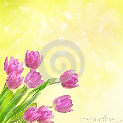 Free Tulip Flowers Background Stock Photography - 32835822