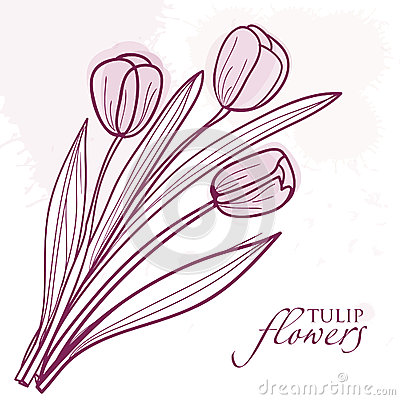 Tulip Flowers Isolated on  Background