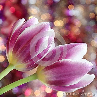 Free Tulip Flowers : Mothers Day Valentines Stock Photos Stock Photos - 40091723