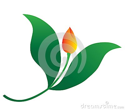 Tulip fly