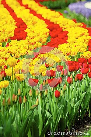 Free Tulip Garden Stock Photo - 14082100